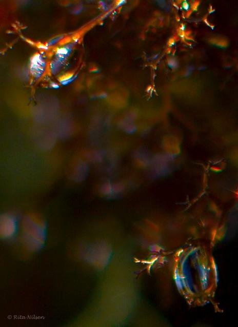 dra%cc%8aper-i-svartmosen