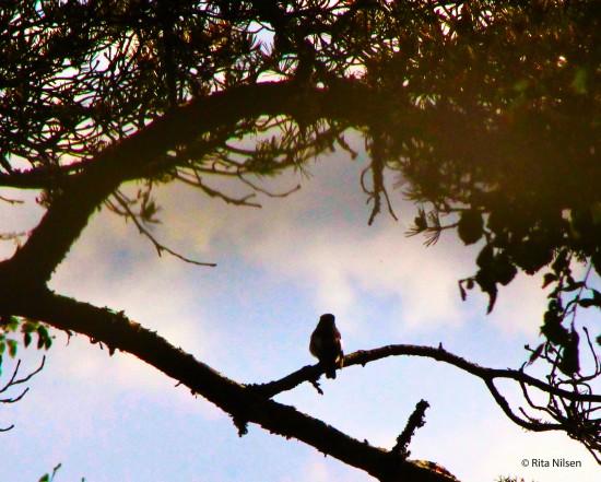 Ensom fugl