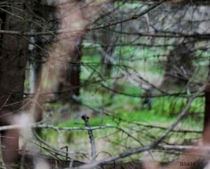 foto: Rita Nilsen, Gresset er grønnere på min andre side