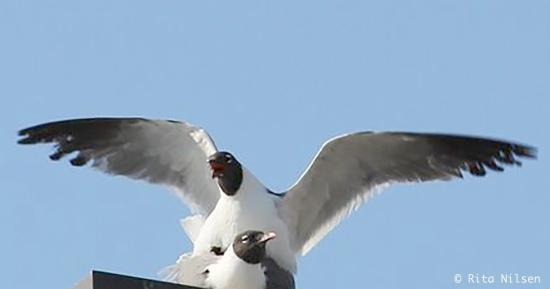 fugl-i-flugt